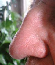 The Gaijin Nose